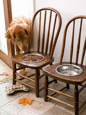 creative pet food holder
